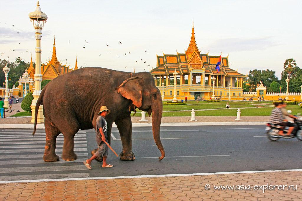 Слон в центре Пномпеня